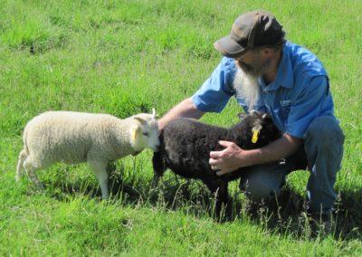 Pets & Breeding